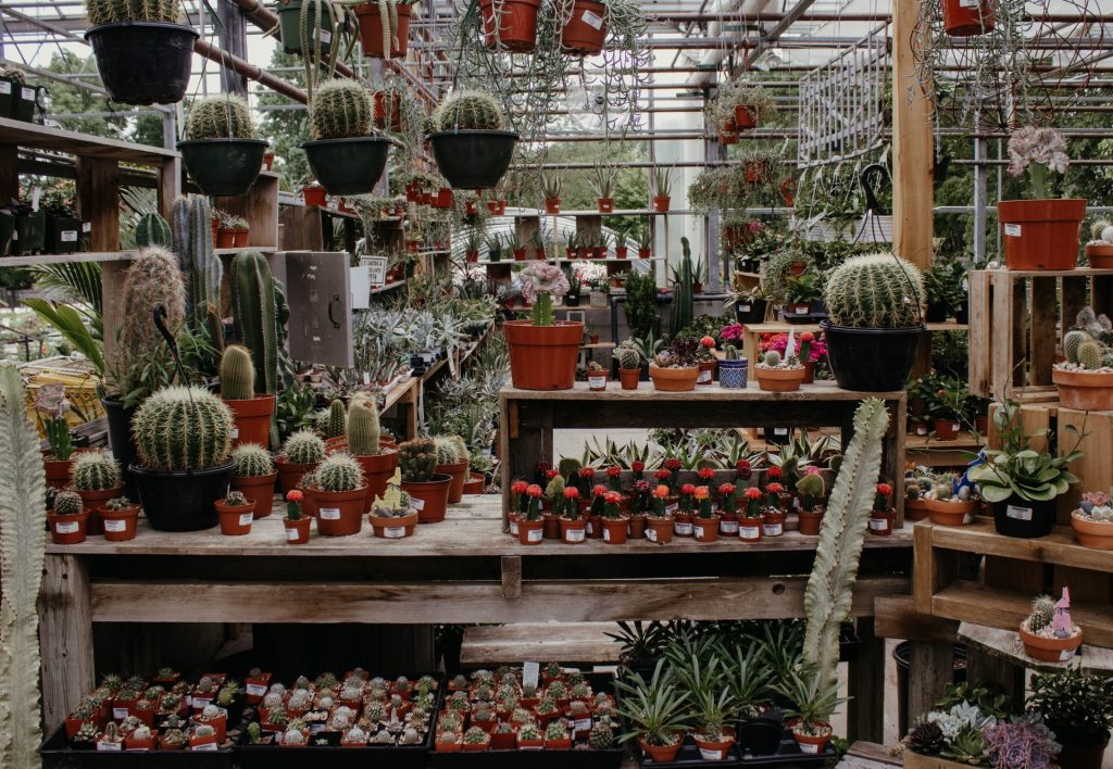 cactus kwekerij
