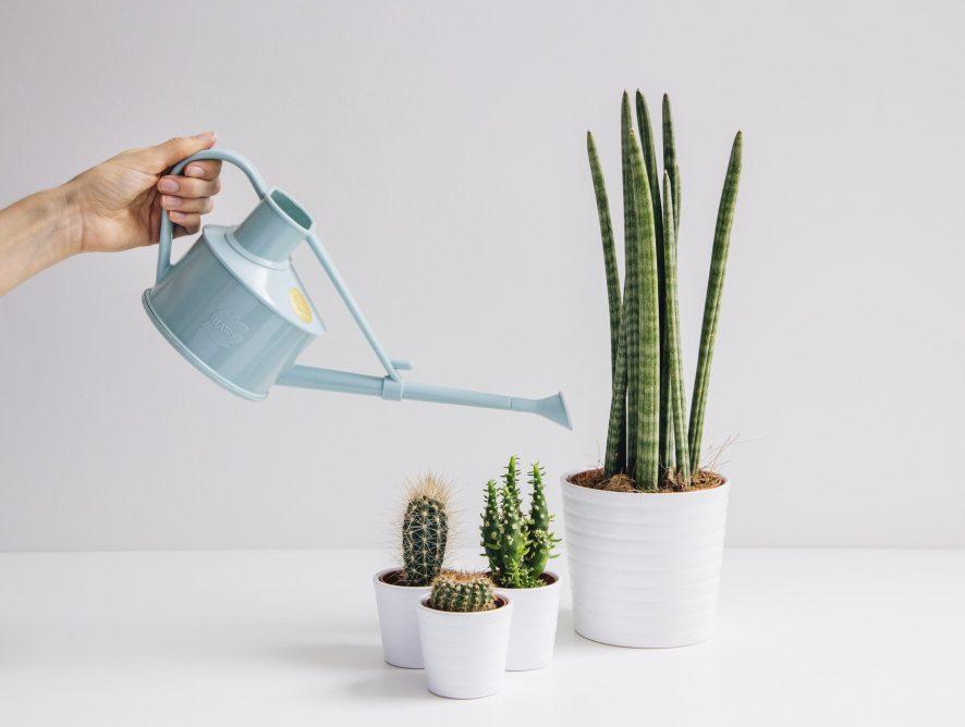 Leer je plant water geven op de beste manier