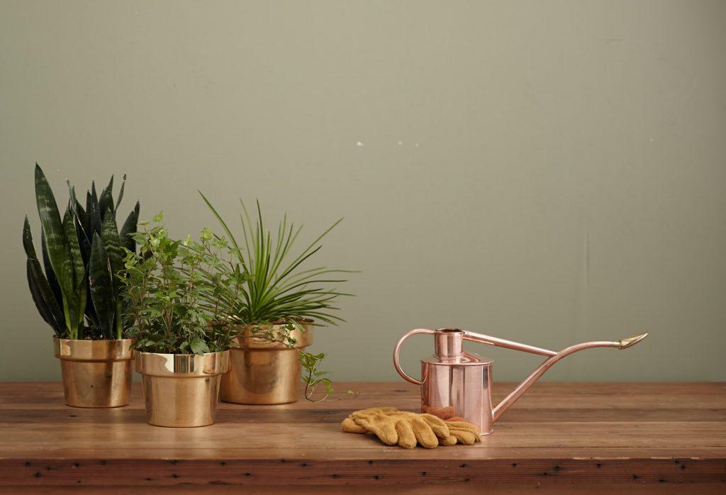 planten gieten