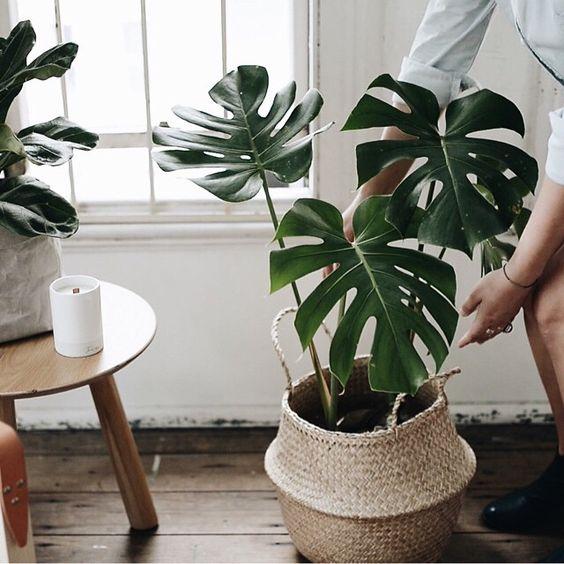 Gatenplant © Brooklyn to Balmain
