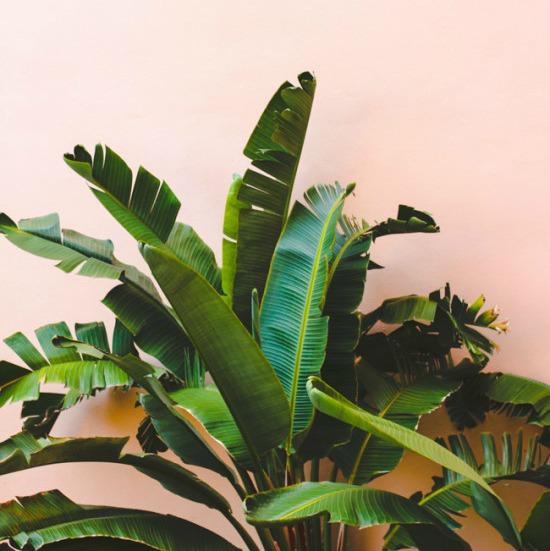 Bananenboom © Papernstitchblog