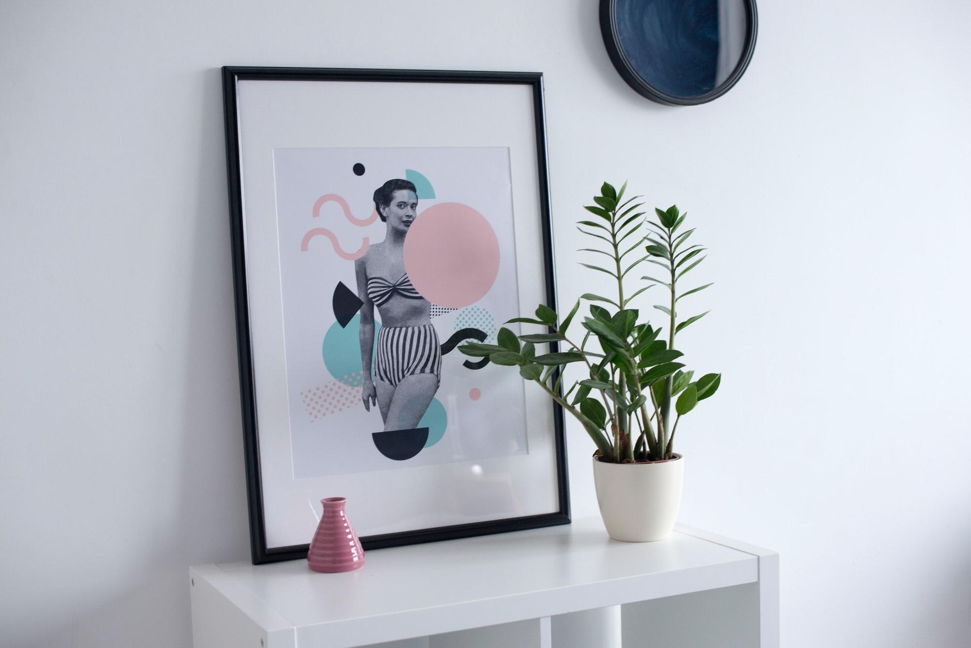 zamioculcas zamiifolia voor urban jungle