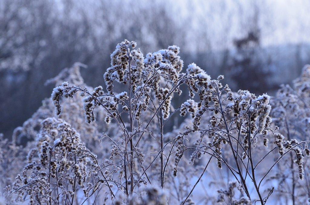 Winter buiten planten