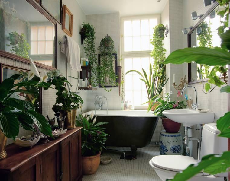 kamerplantentrends in de badkamer