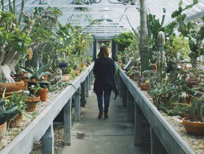 Een kamerplant kopen - hoe doe je dat?