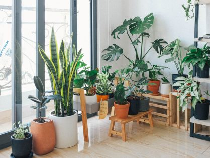 Een kamerplant kiezen - hoe doe je dat?