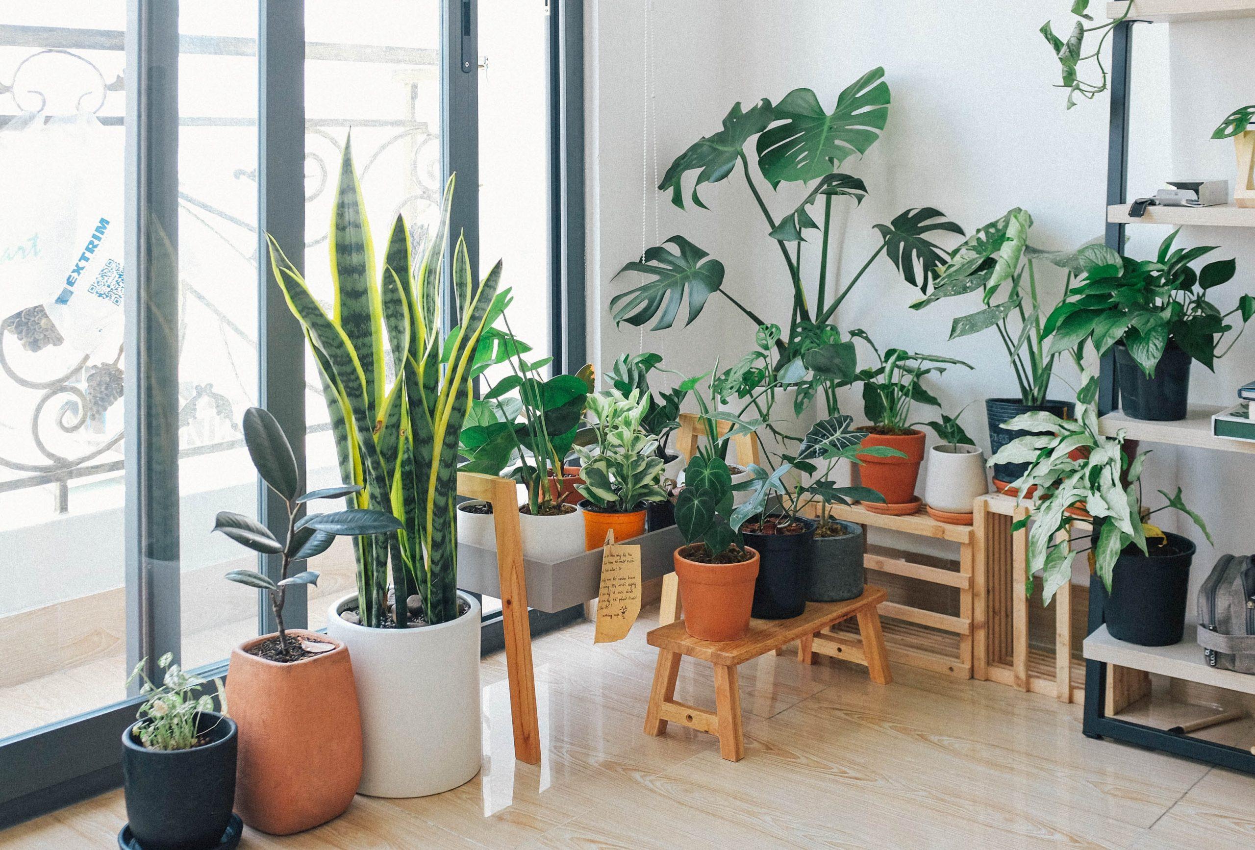 kamerplant verzameling