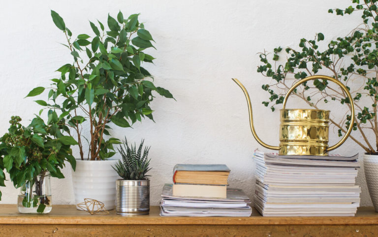 5 voordelen van kamerplanten