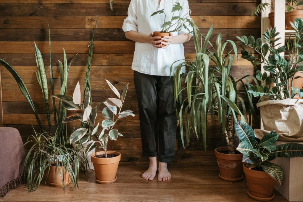 kamerplanten verzameling