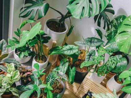 Zo overleven je planten je vakantie