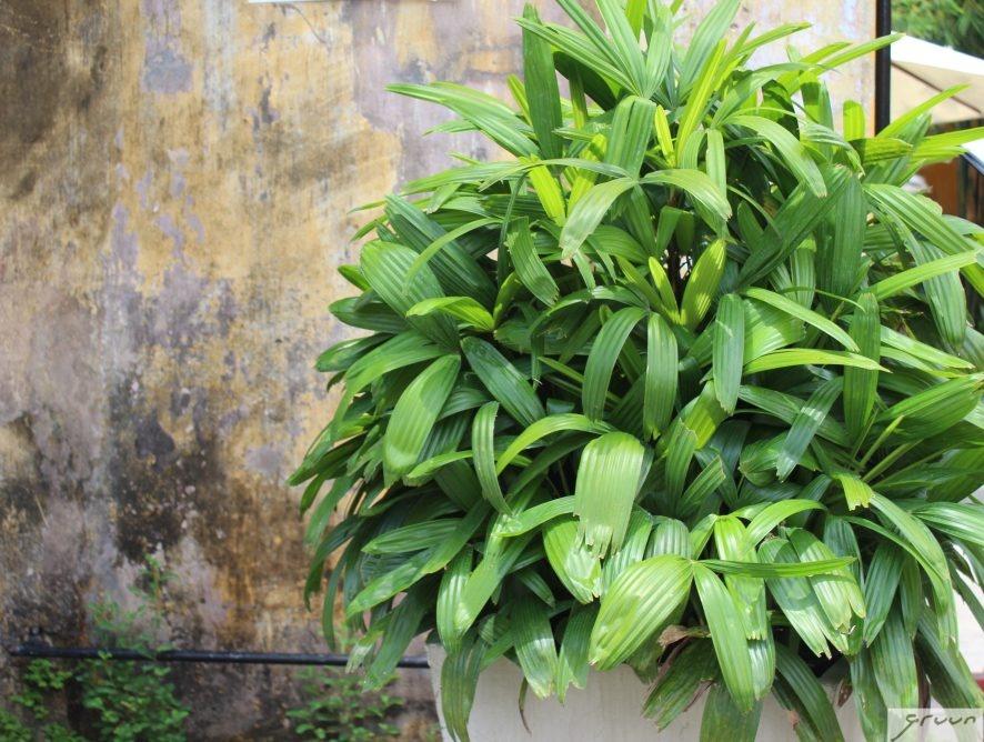 planten buiten op het terras