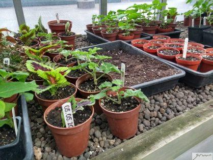 Planten stekken - hoe doe je dat?