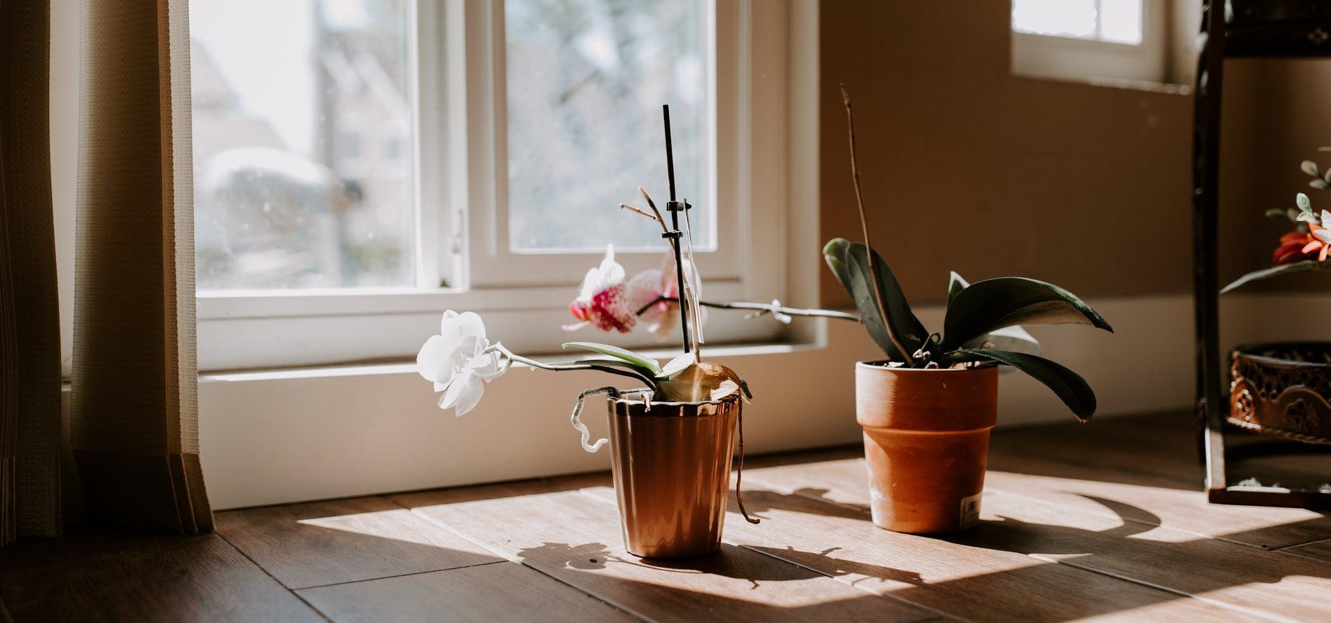 Houd je planten in topvorm dit najaar: 5 tips