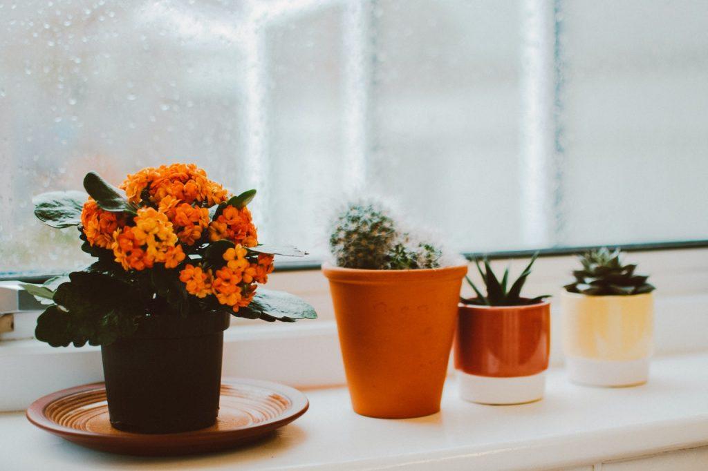 kleine planten op vensterbank