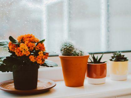 Help! Hoe overleeft je kamerplant deze winter?
