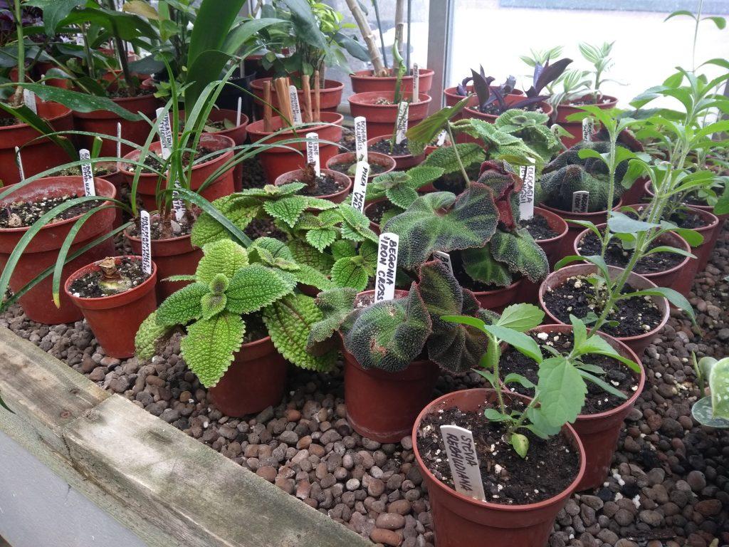 Kamerplanten stekjes