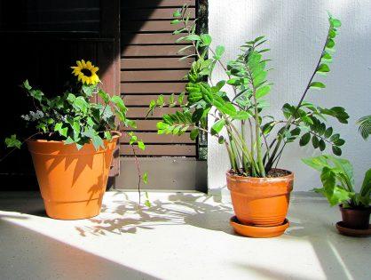 Leve de vakantie! Naar buiten met je kamerplanten