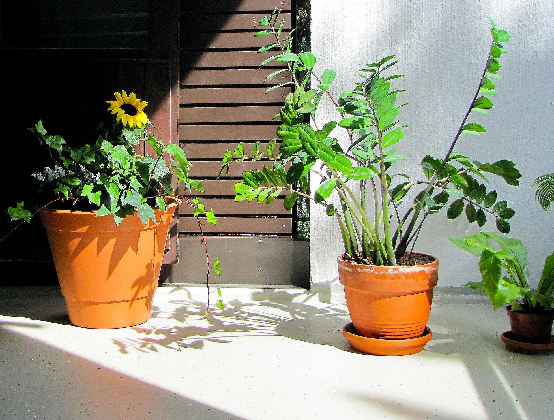 planten buiten zetten