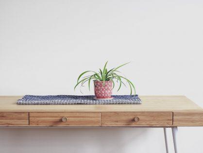 Supermakkelijke plant Chlorophytum comosum (graslelie)