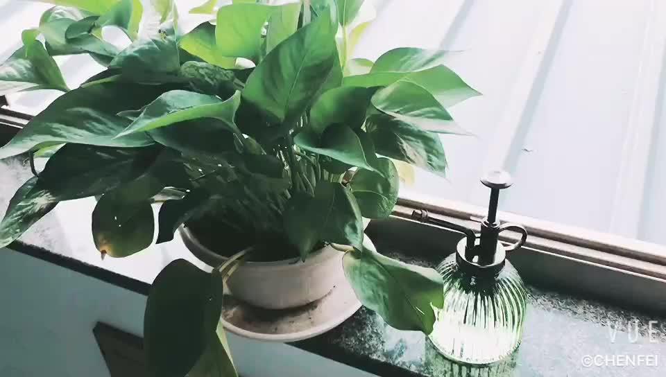 plantenspuit
