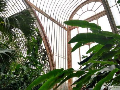 Binnenkijken in de serres van Kew Gardens, Londen