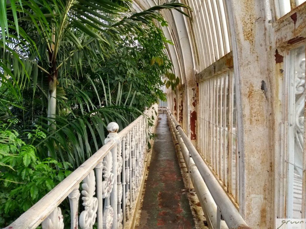 bovenverdieping palm house