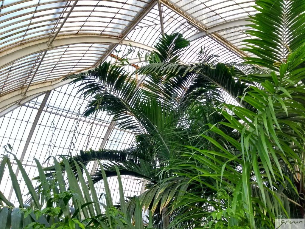 palmen in palm house