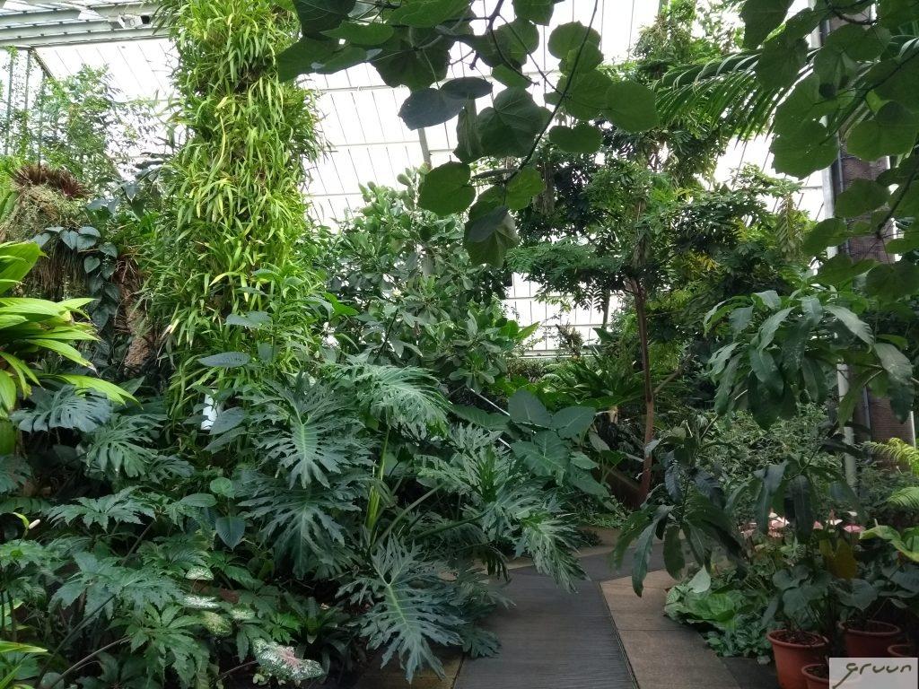 kew kas met tropische planten
