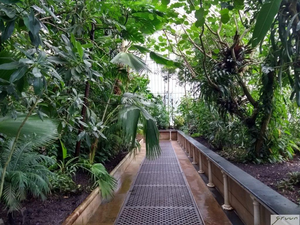 palm house in kew gardens