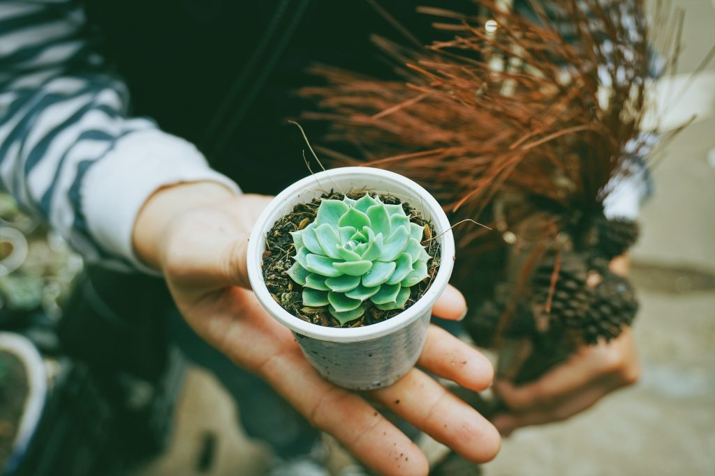 Vetplant als geschenk