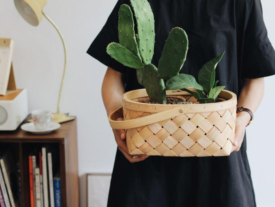 Geef een kamerplant cadeau