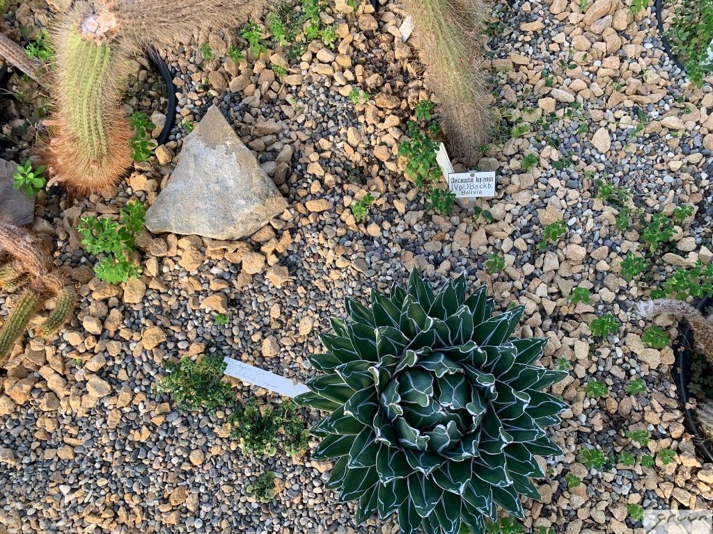 detail succulentenkas gent