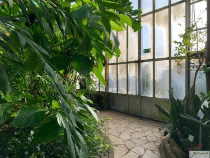 Kamerplanten spotten in de Gentse Plantentuin