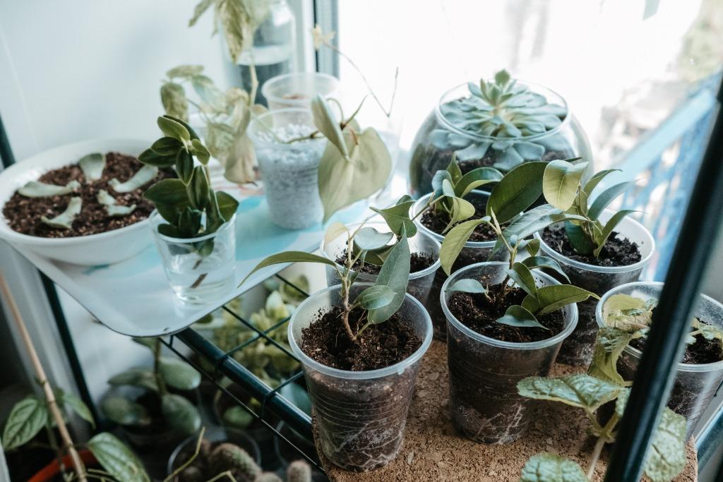 Stekjes van groene planten