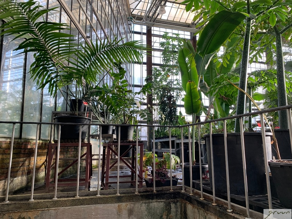 ingang tropische serre plantentuin