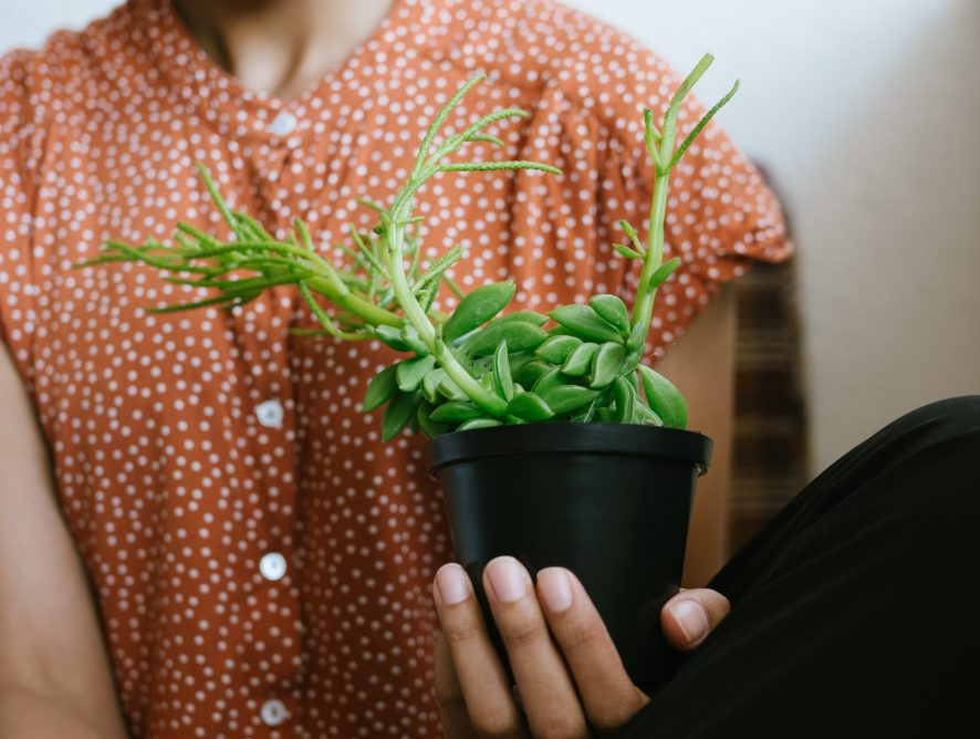 Groene bezigheden voor wie thuis zit (maar geen tuin heeft)