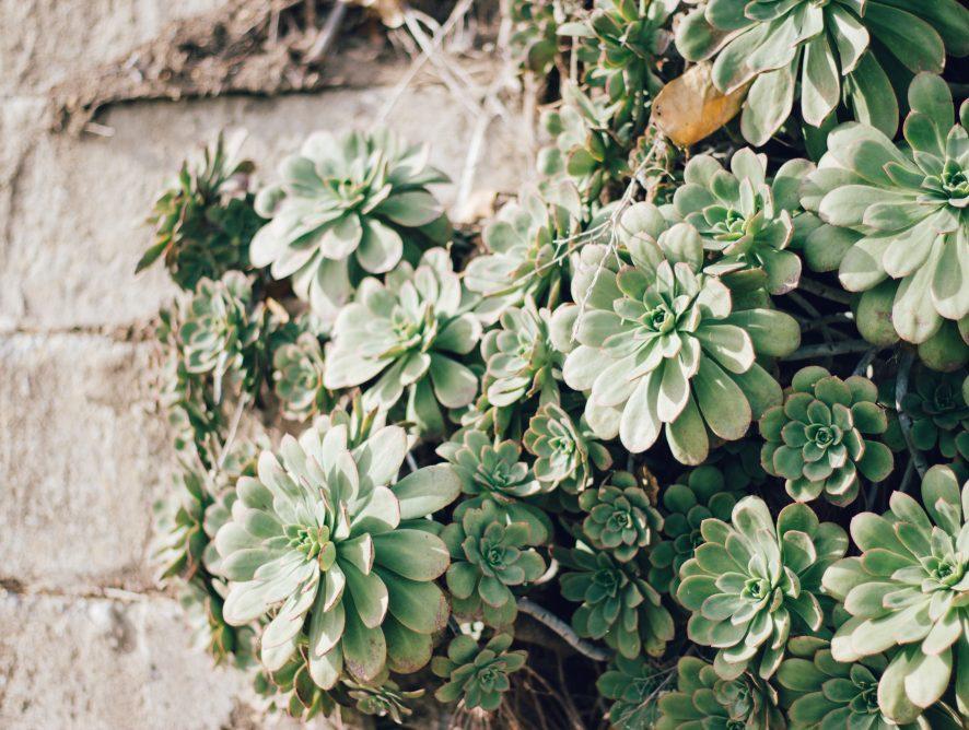 Kamerplanten voor in de directe zon