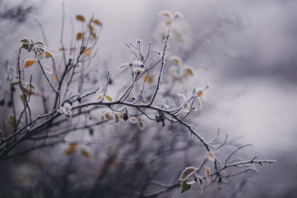 natuur in de winter, rijm