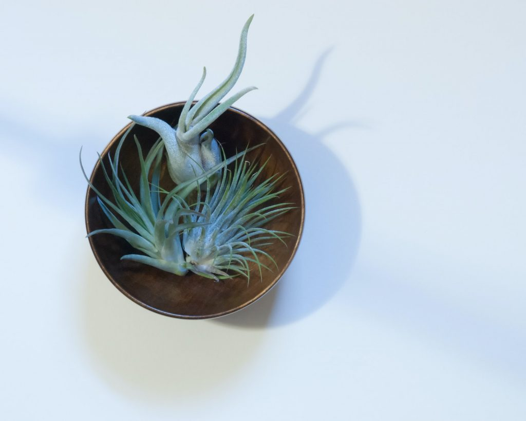 3 tillandsia's of air plants in pot