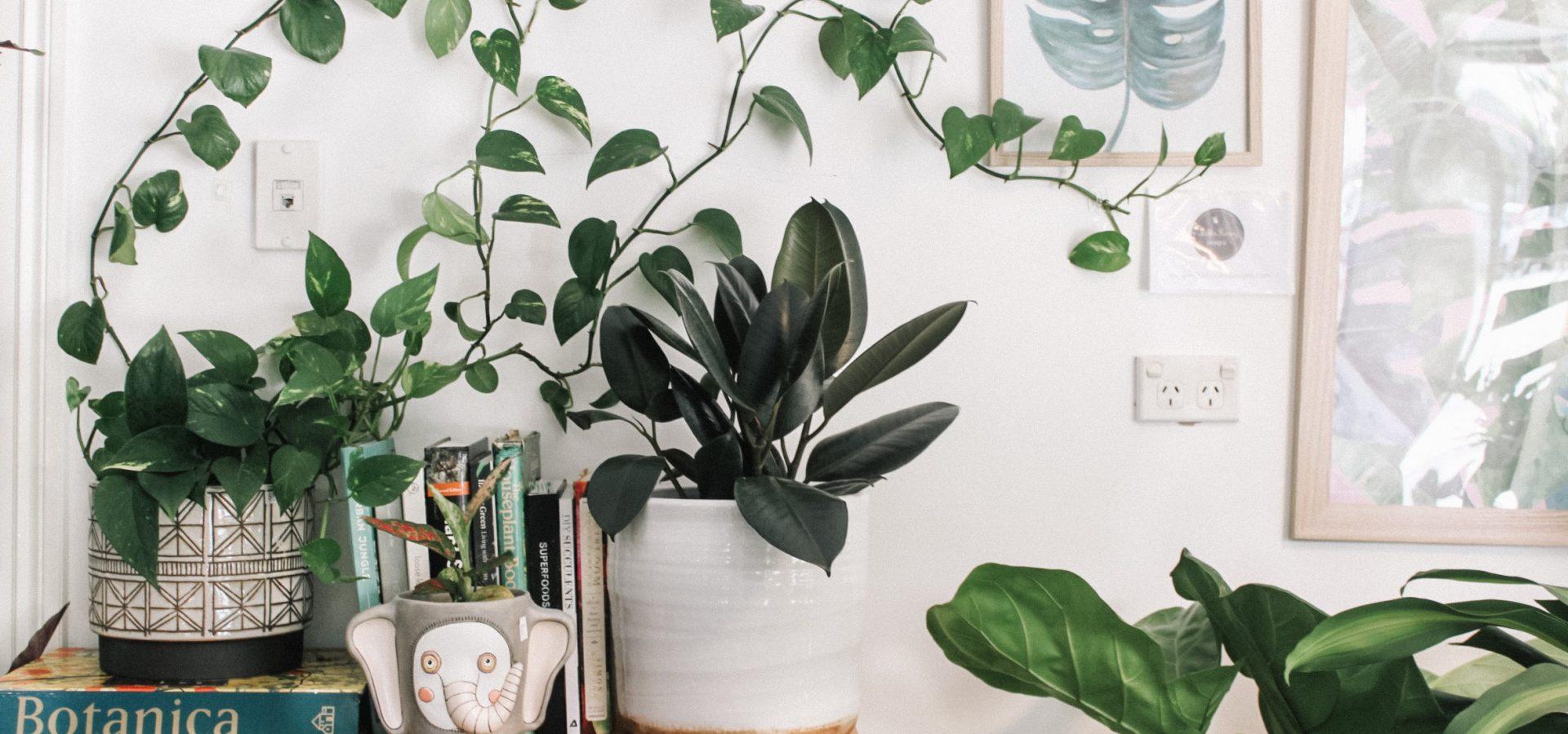 Over kamerplanten en wat ze voor je doen