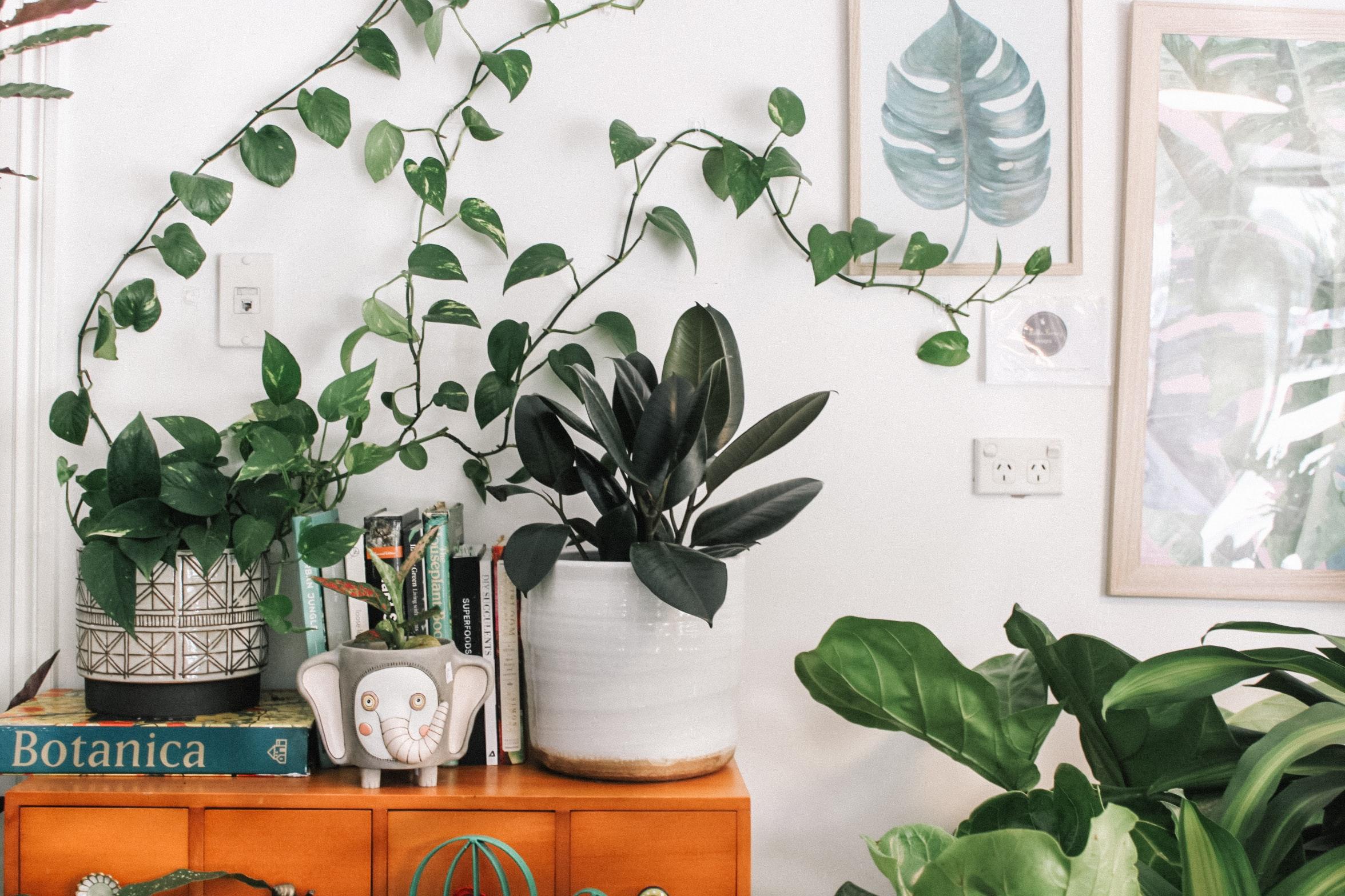 verschillende soorten kamerplanten