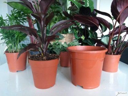 Zo maak je een luchtige potgrondmix voor tropische kamerplanten