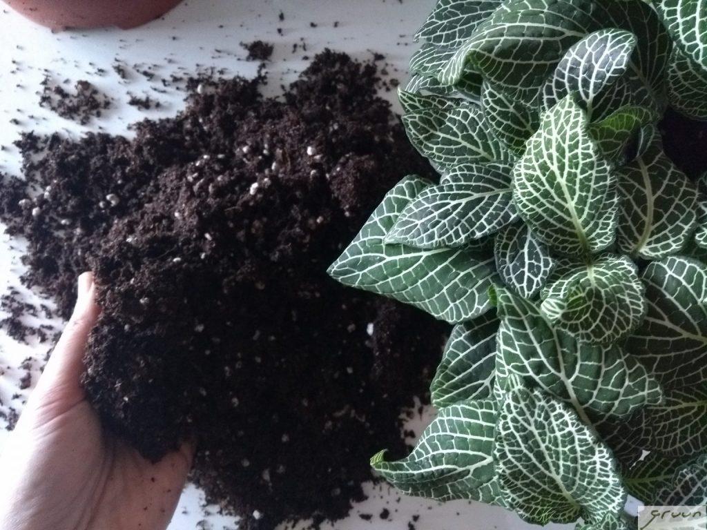 gemixte potgrond voor tropische planten