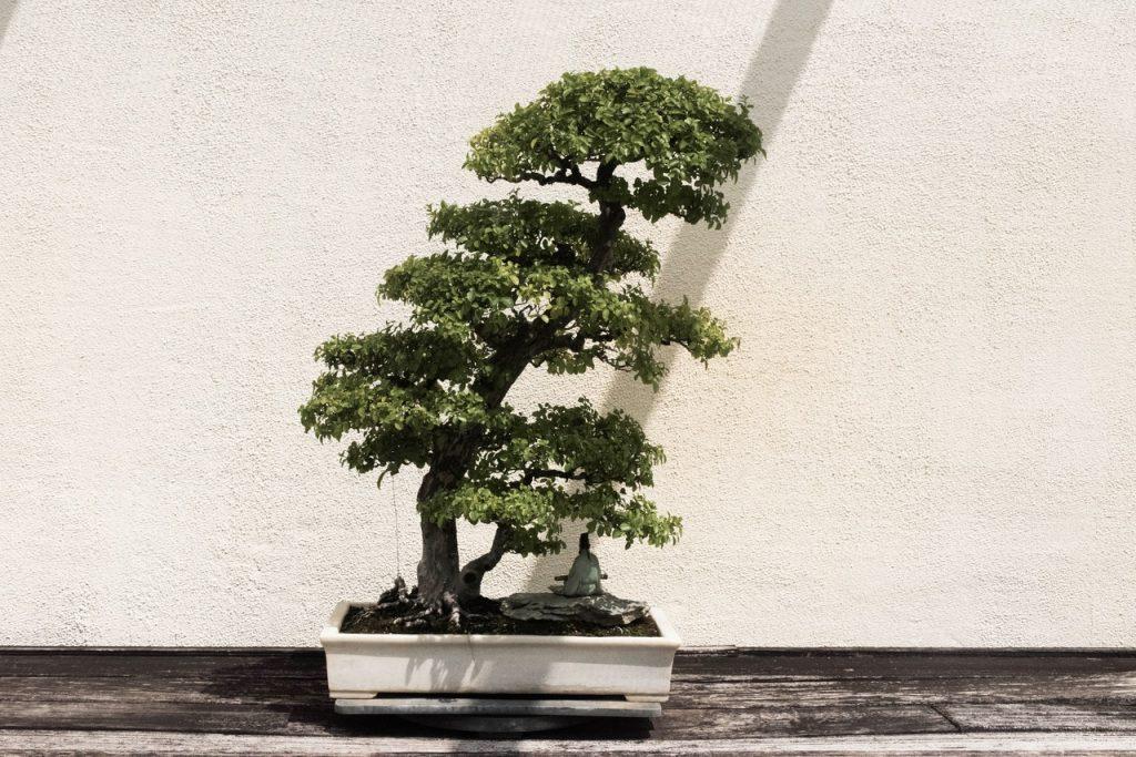 groene bonsai