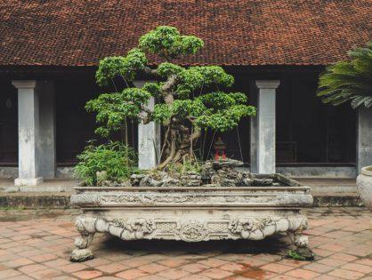 Bonsai: introductie in de wereld van miniatuurbomen (deel 2)