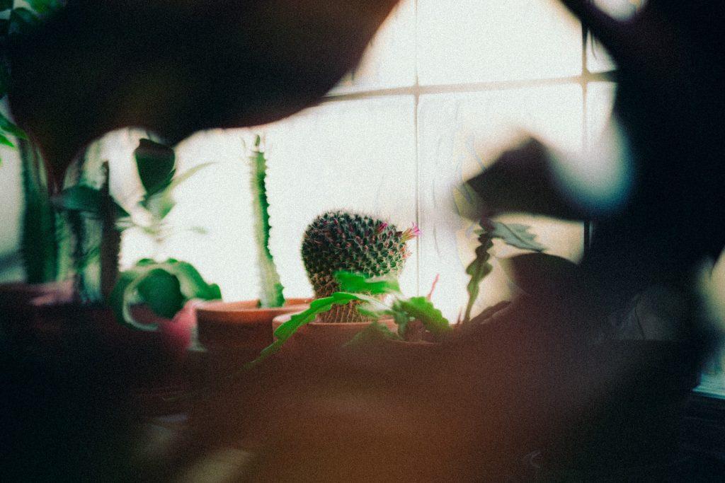 kamerplanten giftig