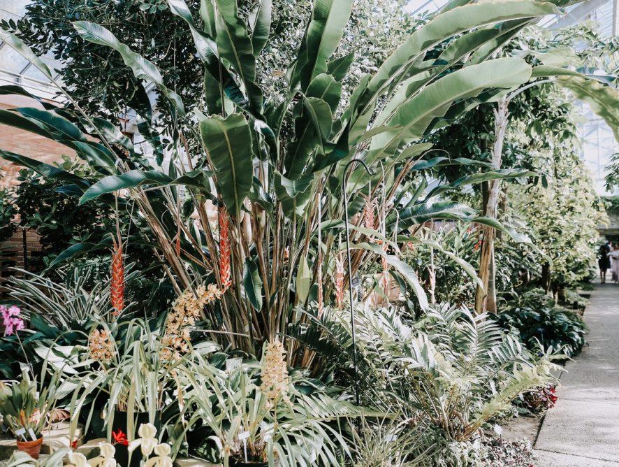 Tropische aanvulling voor je urban jungle: Heliconia