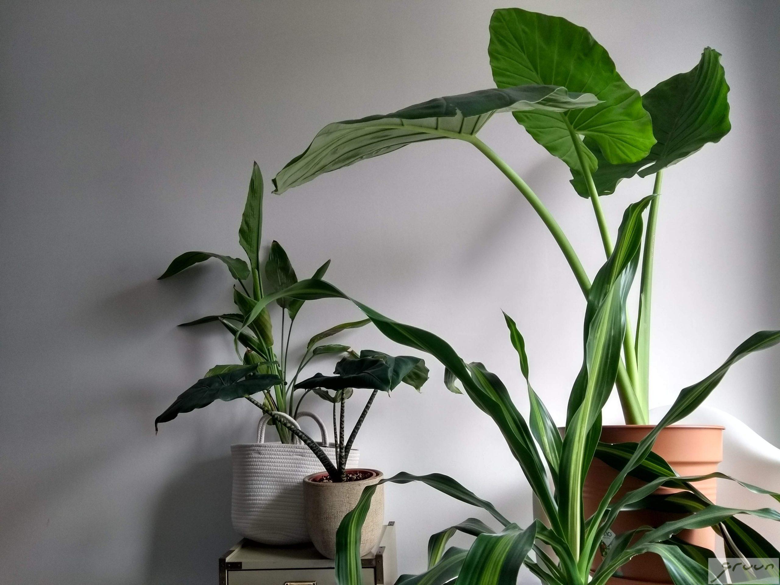 kamerplanten groep