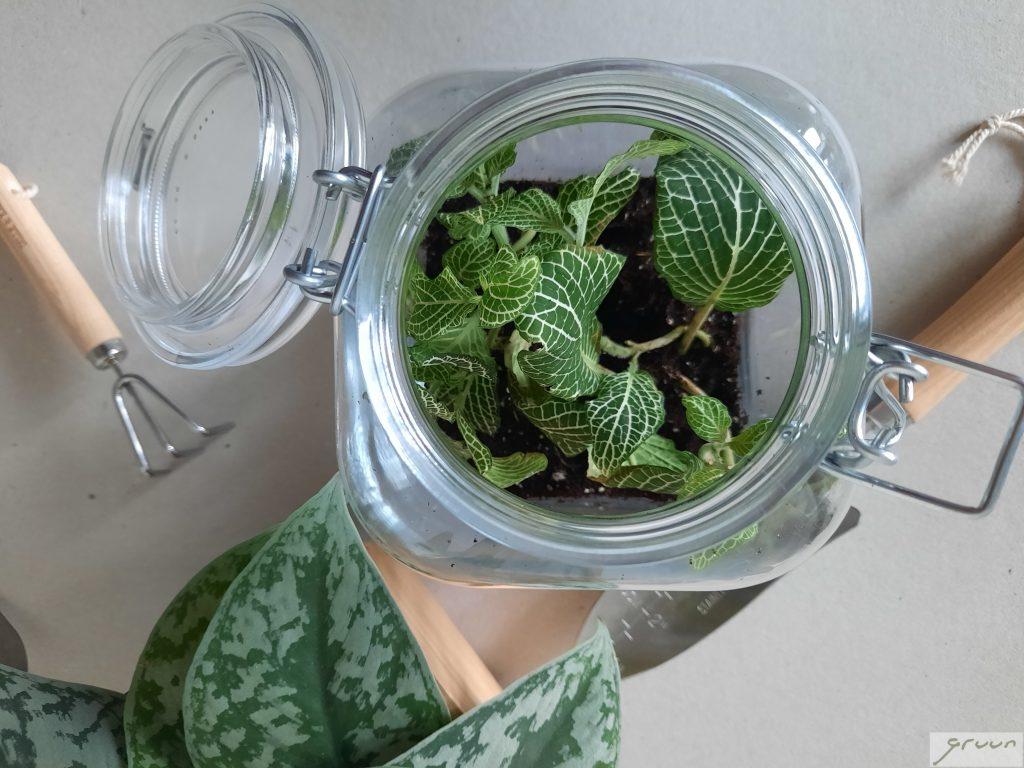 zelf een plantenterrarium maken