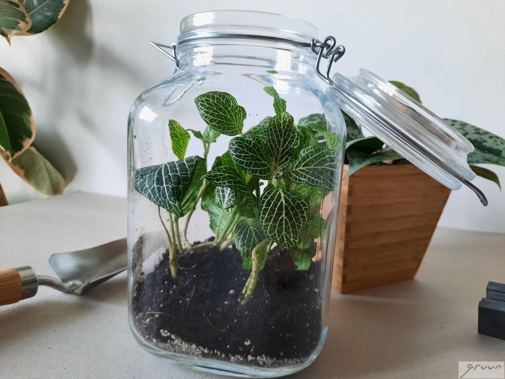 zelf urban jungle terrarium maken
